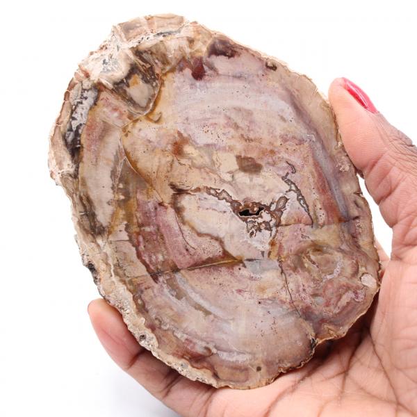 Fetta di legno fossile pietrificato